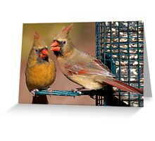Female Cardinals Greeting Card
