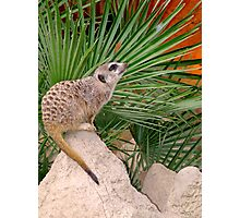 A Huricata on top of the rock Photographic Print