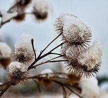 Spiky by Sylvain Dumas