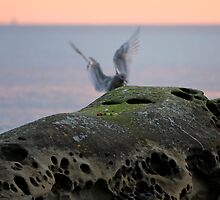 On the Wings of Dawn by TerrillWelch