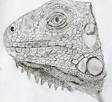 Green Iguana  sketch by ClareLH