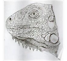 Green Iguana  sketch Poster