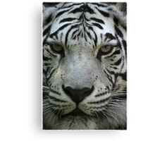 Stripes on a tiger don't wash away............ Canvas Print
