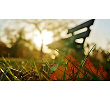 Back-lit Fallen Leaf with Bench Photographic Print