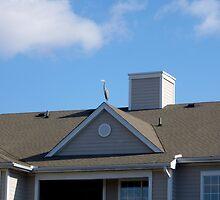 Rooftop Heron By Jonathan Green by Jonathan  Green