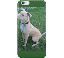 Young American Pit Bull Terrier iPhone Case/Skin