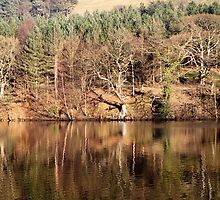 Winter Reflections - Ladybower by Jon Bradbury