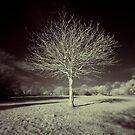 Alone  by Yhun Suarez
