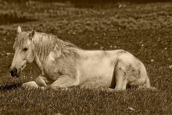 White Stallion of Absaroka by Sue Ratcliffe
