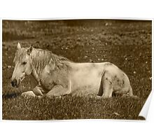 White Stallion of Absaroka Poster