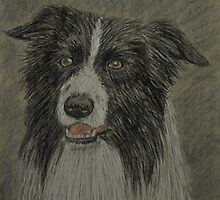 Border Collie by Tricia Winwood