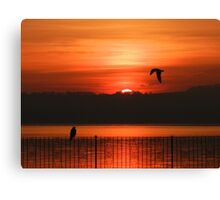 Almost time to roost Canvas Print
