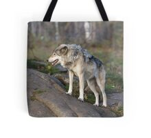 A lone timber wolf  Tote Bag