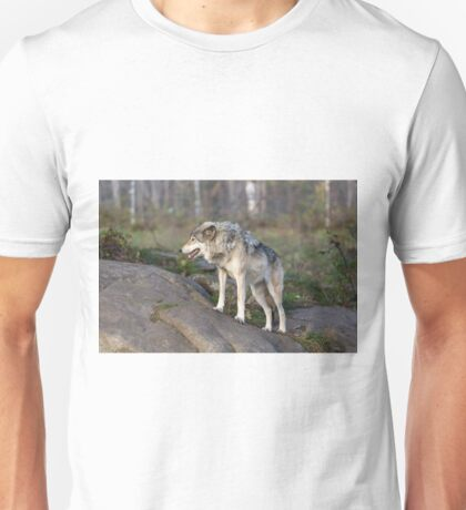 A lone timber wolf  Unisex T-Shirt