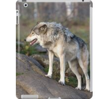 A lone timber wolf  iPad Case/Skin