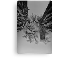 Fighting Brothers Canvas Print