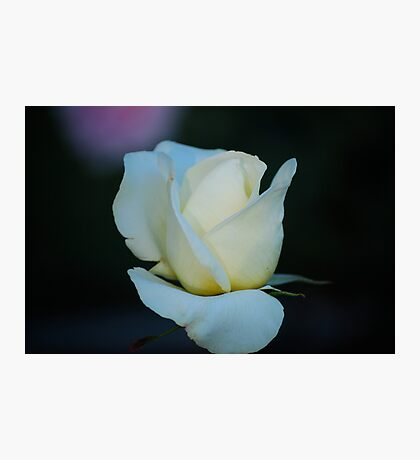 White Simplicity Photographic Print