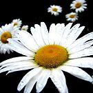 Beautiful Wild Flower by Brenda Dahl