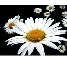 Beautiful Wild Flower Photographic Print