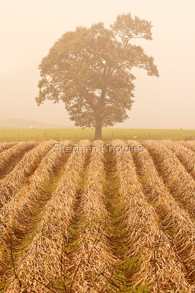 The Ploughed Field by Stephen Knowles