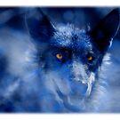 Wolf by Mal Bray
