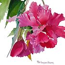 Ruffled Begonia Watercolor by Pat Yager