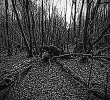 Dering Woods - Fallen by Dave Godden
