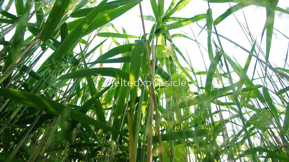 Sunlit Grass by Jessica Liatys