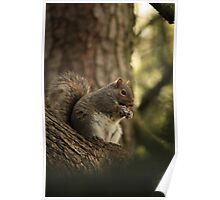Squirel Poster