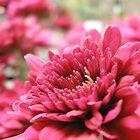 Red Flower by Mellinda