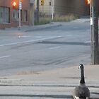 Urban Goose by Mellinda