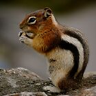 Chipmunk by Jordan Schofield
