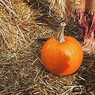 Orange Pumpkin by Eliza Sarobhasa