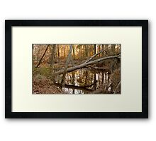 Felled tree at Phinizy Swamp Framed Print
