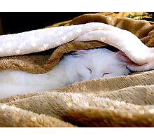 Sleeping under the warm blanket Photographic Print