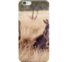 Red Kangaroos, Currawinya National Park iPhone Case/Skin