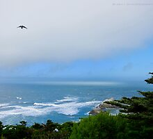 Sutro Gardens and the Ocean by David Denny