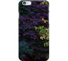 Fall Colors (1447) iPhone Case/Skin