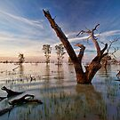 Tree of Light - Menindee, NSW by Malcolm Katon