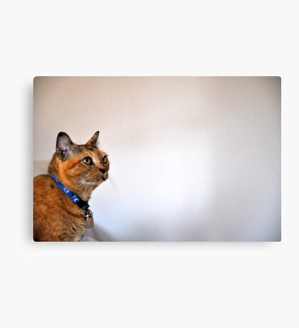 I wish that tiny bug will fall soon...meow...: Got 4 Featured Works Canvas Print