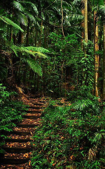 Wollumbin rainforest green path by Mark Malinowski