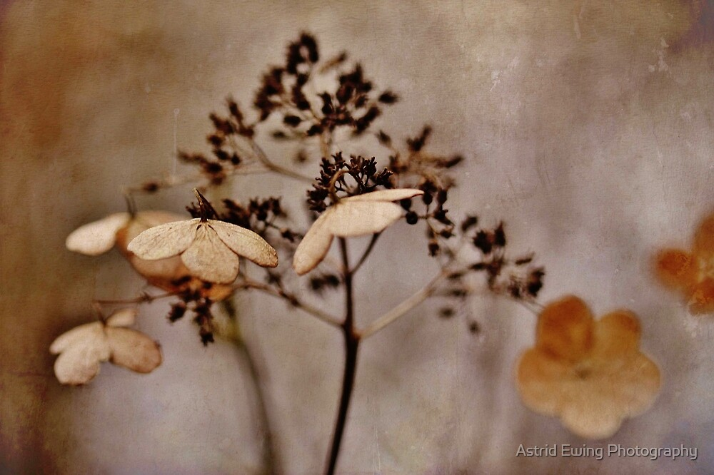 Fear not for the future, weep not for the past.  by Astrid Ewing Photography