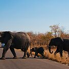 Take care crossing the road! by Erik Schlogl