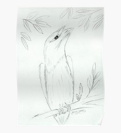 Tawny Frogmouth Sketch Poster