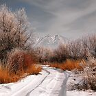Winter Color by Cyn  Valentine