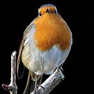 Mr Robin by Hovis