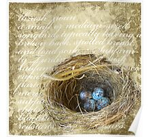 Bird's Nest with Blue Eggs  Poster
