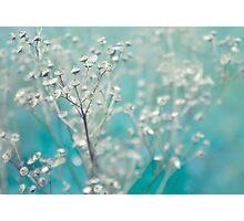 Bleu d'hiver Photographic Print