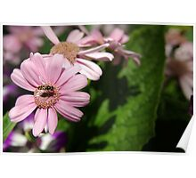 Pink Pollen Collector Poster