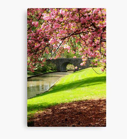 Blossoms... Canvas Print